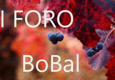 foro-bobal3