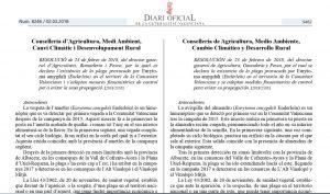 Declarada la plaga de la Avispilla del almendro en Valencia y Alicante