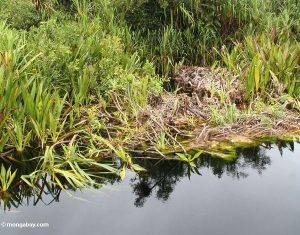 La CHJ se compromete a la limpieza del río