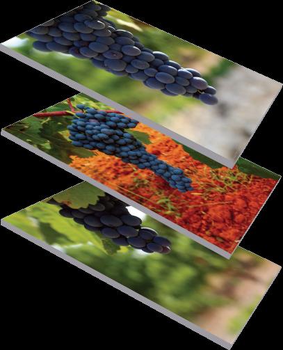 Coag urge a la Agencia de Información y Control Alimentarios a la comprobación de contratos de uva
