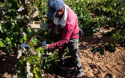 El Consell transfiere casi 74 millones de euros de ayudas de la PAC al sector agrario