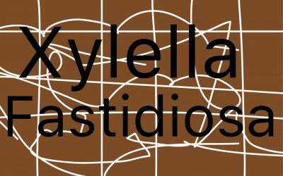 LA UNIÓN reclama el pago inmediato de las indemnizaciones para las afectados por la Xylella
