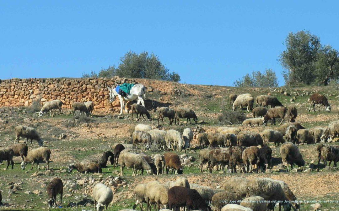 El Consell subvenciona el pastoreo controlado para prevenir incendios