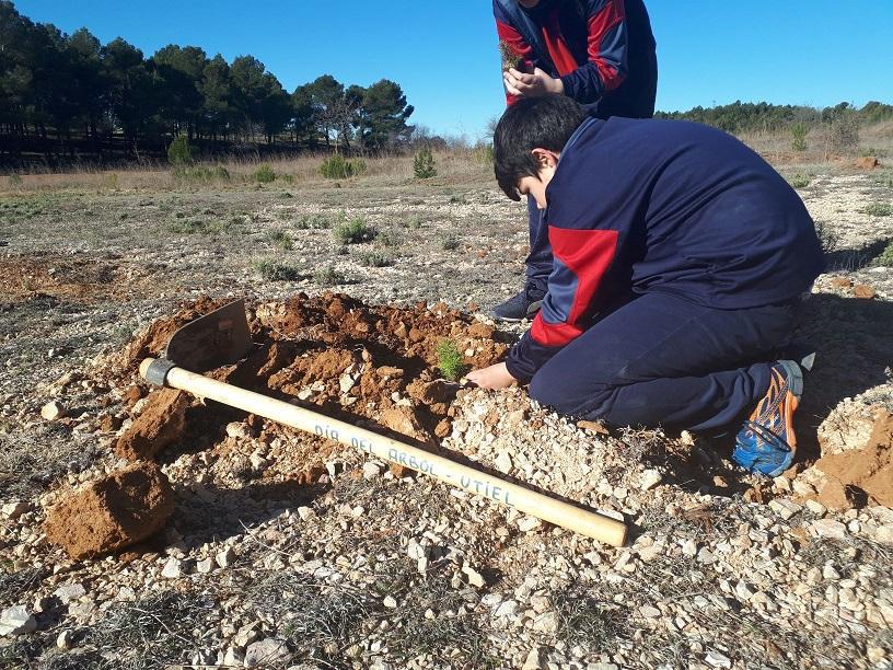 Utiel celebra el Día del Árbol con la participación de escolares en la plantación de 800 ejemplares