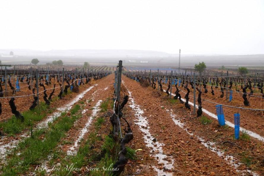 En el medio rural achacan la irregularidad en las precipitaciones al cambio climático