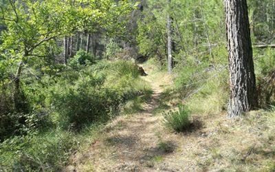 Abierta la inscripción para el programa de voluntariado ambiental en prevención de incendios forestales