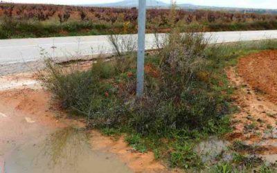 La lluvia beneficiará al cultivo de la vid