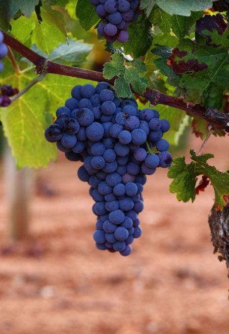 Comienza una nueva campaña vitivinícola llena de incertidumbres.
