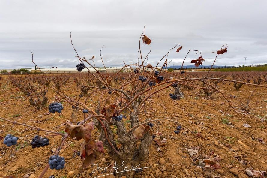 Los agricultores se quejan del retraso en el pago de las subvenciones