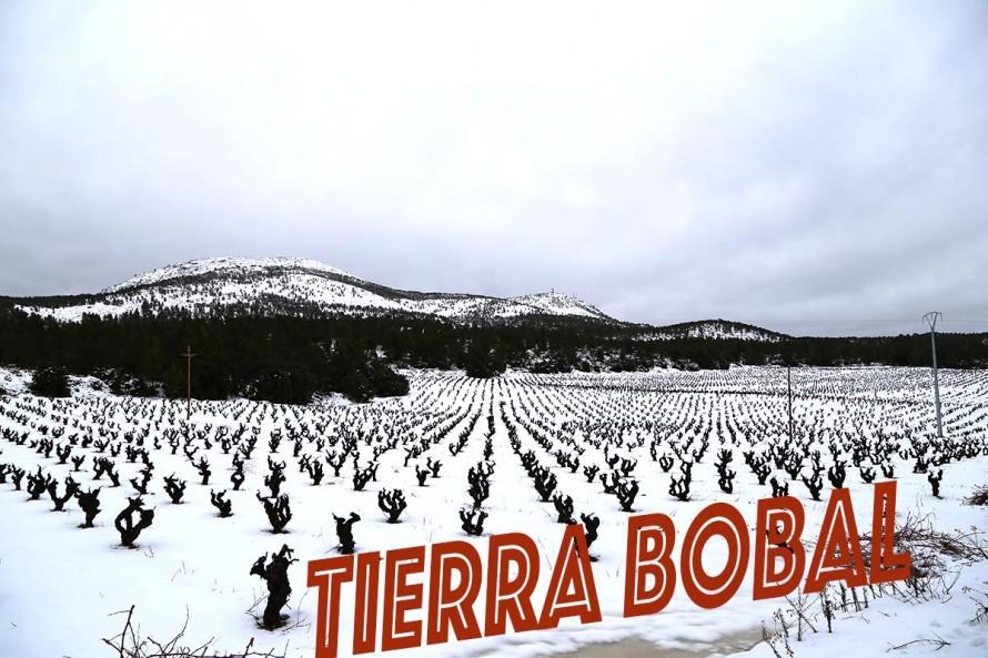 Tierra Bobal es la Denominación de la Comarca como destino turístico
