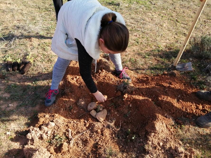 Más de un centenar de escolares de Utiel reforestan la Sierra del Negrete