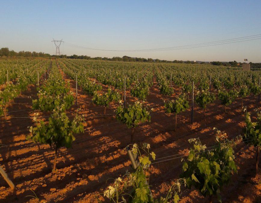 El Ministerio de Agricultura propone tres medidas para eliminar los excedentes de vinos