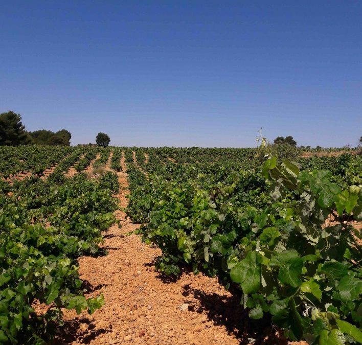 El Parlamento Europeo propone conceder una ayuda de hasta 7.000 euros por explotación agraria y de 50.000 a las Pymes