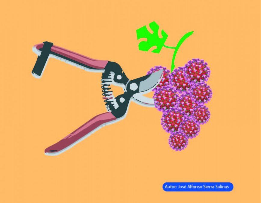 El Covid-19 preocupa a los viticultores por las consecuencias que puede tener en la vendimia