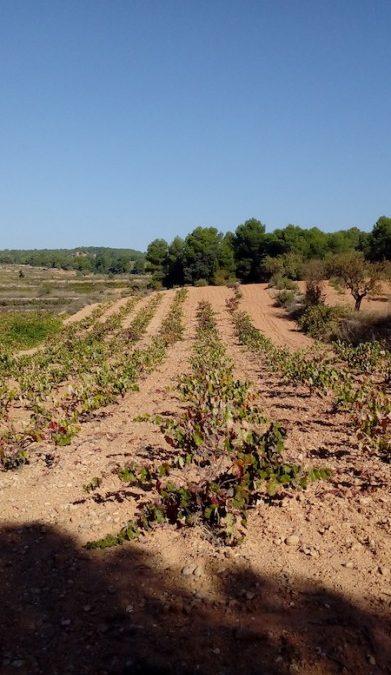La Unión de Uniones propondrá al Ministerio de Agricultura medidas para eliminar los excedentes vínicos.