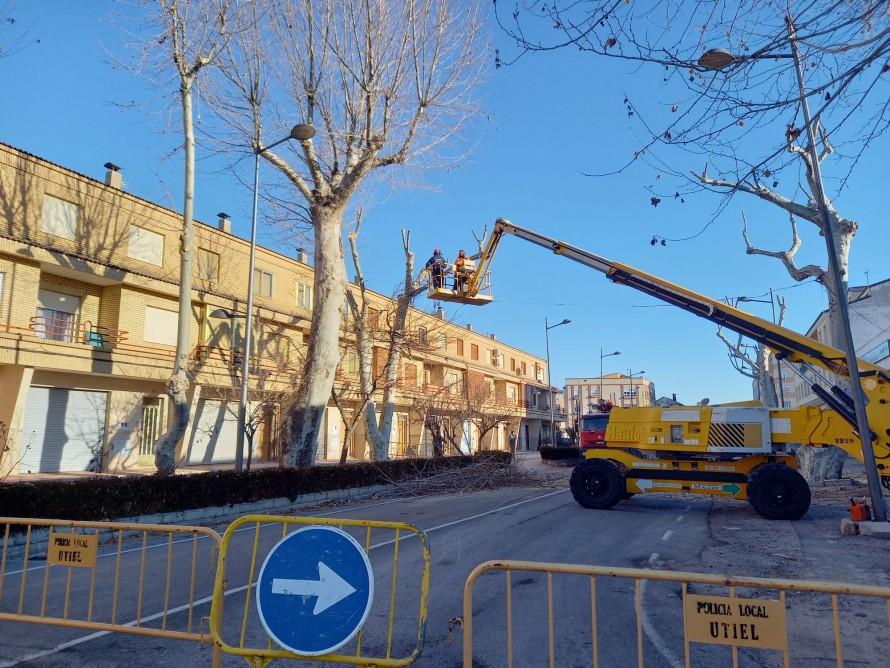 Arranca la campaña de poda de árboles en Utiel