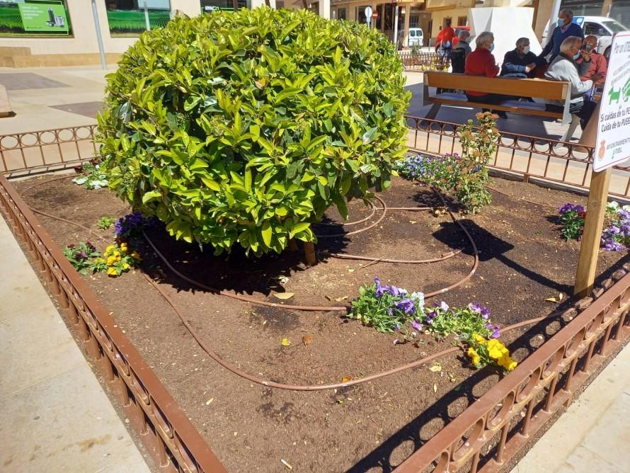 Actos vandálicos en jardines públicos de Utiel