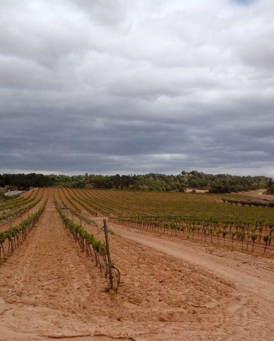 Las bajas temperaturas amenazan a los viñedos
