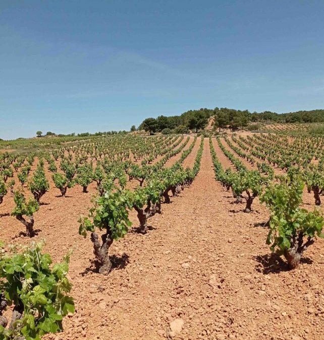 La Generalitat convoca las ayudas para los jóvenes que quieran dedicarse a la agricultura.
